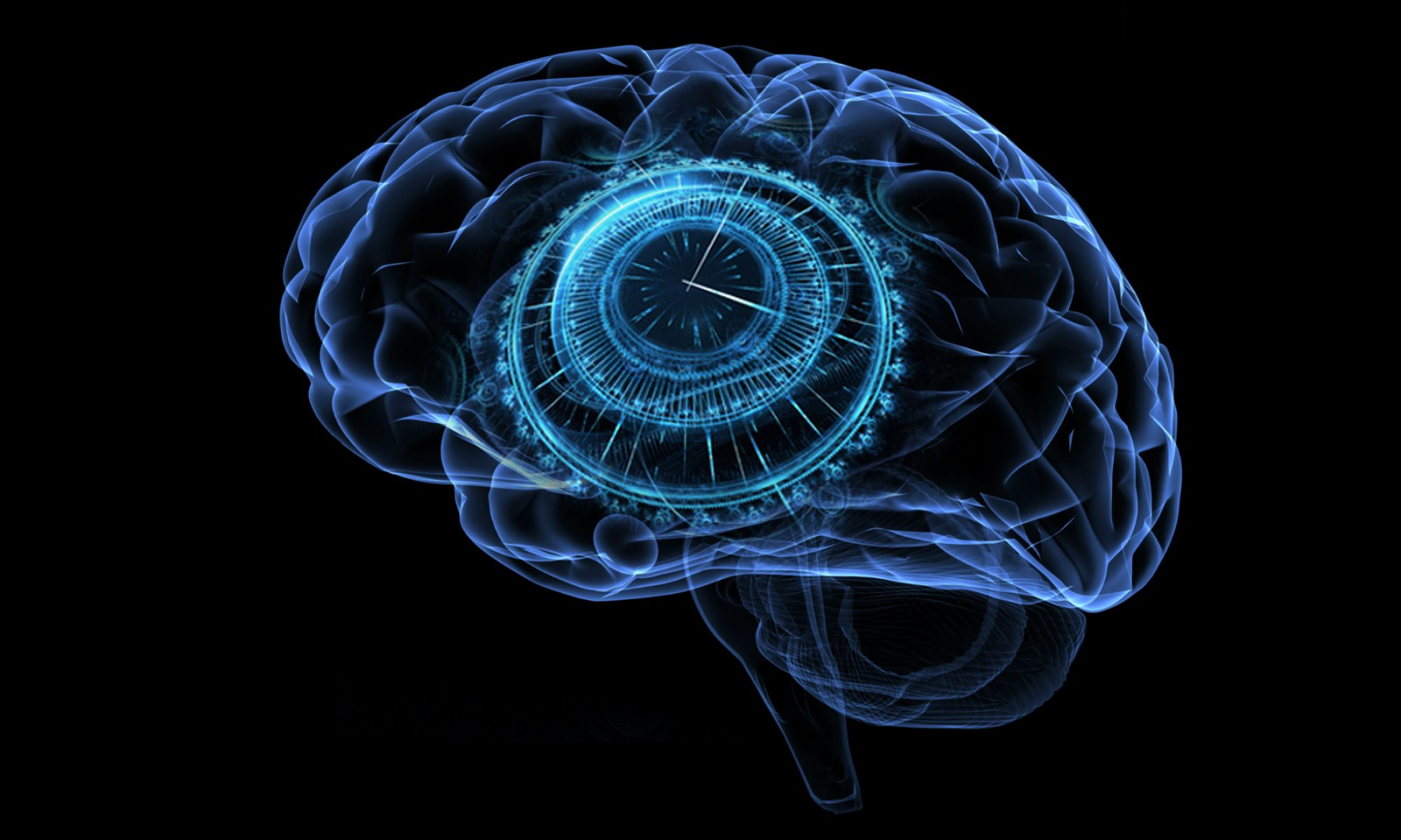 Time in Brain and Behaviour Laboratory
